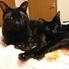 ネグレストから解放された黒猫、カール君 サムネイル6