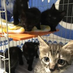 子猫3匹と母猫を保護( ^ω^ )