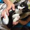 生後2か月ほどの子猫
