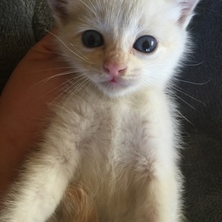 一ヶ月くらいの子猫