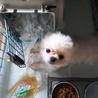 GO!保護犬医療費フリマin東京・中野坂上