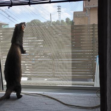 外に行きたいなー