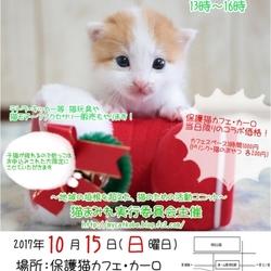子猫まみれwithカーロ