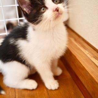 つぶらな瞳の白黒美猫ちゃん