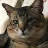 表情が豊かな猫です。