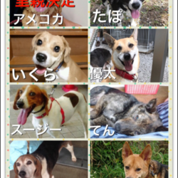 犬猫里親会&バザー★三冨今昔村くぬぎの森交流プラザ★ サムネイル3