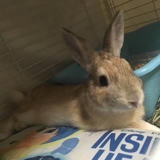 可愛いウサギのブルーノくん
