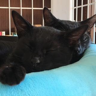 トライアル中5か月くらい 小柄なかわいい黒猫ちゃん
