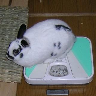 ☆サークル他用品一式付でウサギの里親を募集します!