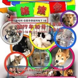 倉敷市保健所犬猫譲渡会レポート