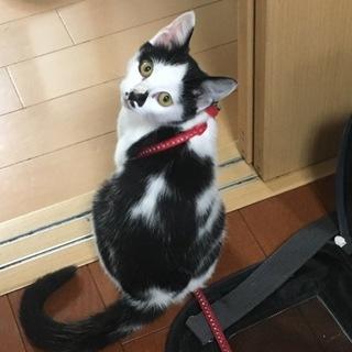 ハチワレで可愛いちょび髭の猫ちゃん