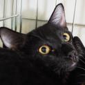 イケメン黒ネコ♪りく♪