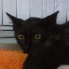イケメン黒ネコ♪りく♪ サムネイル2