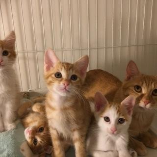 かわいい3姉妹の里親を募集します♡