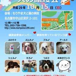 10/15(日)名古屋市守山区で犬の譲渡会