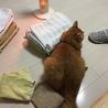 シーちゃんの真似っこ。せっかく畳んだタオルを崩し、シーちゃんよりワルイやつ( *`ω´)