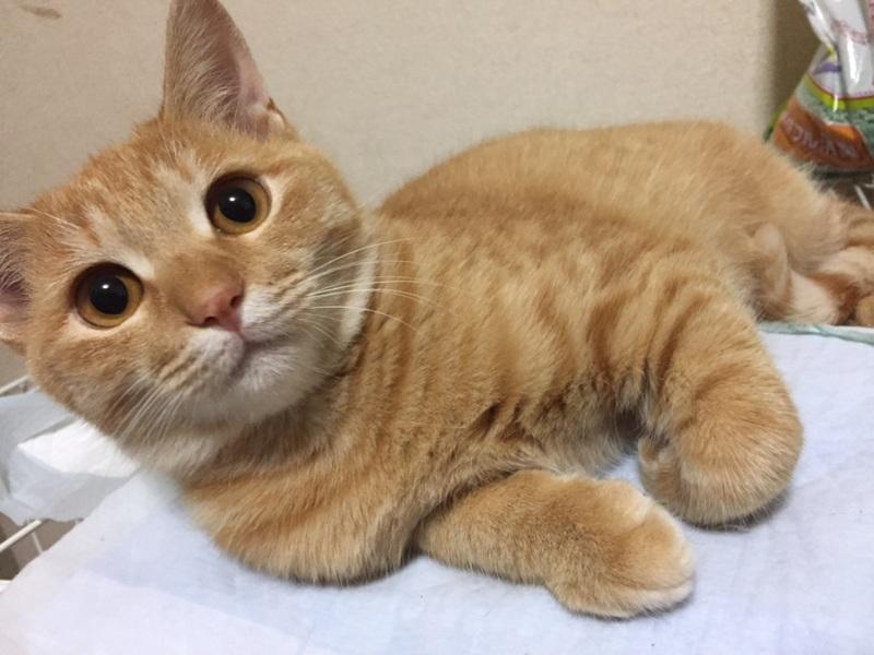 可愛い茶トラ猫ちゃん