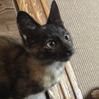 (一時停止)黒サビ柄のメス美猫