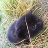 生後1ヶ月未満の子猫です! サムネイル2