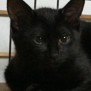 おっとり、のんびり〜黒猫クロちゃん