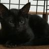 おっとり、のんびり〜黒猫クロちゃん サムネイル2