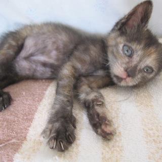 動画あり 小柄なサビ猫おんねりちゃん