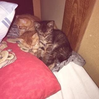 生後1ヶ月ぐらいの子猫ちゃん3匹