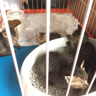 ⭐︎保護した子猫5匹⭐︎人懐っこい子猫です