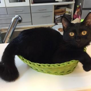 黒猫チビのドキンちゃん、 名古屋から