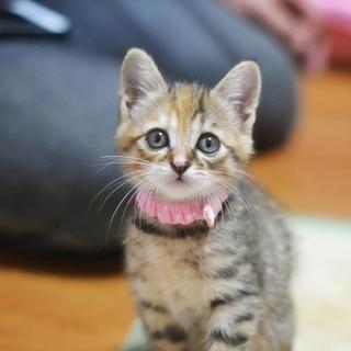 まるがお美猫【なみ】