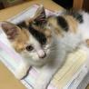 約2ヶ月‼︎かわいい子猫!県外も応相談可能‼︎ サムネイル2