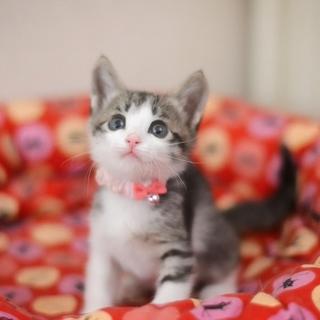ミルク育ちの美猫【月秋】