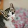 ミルク育ちの美猫【月秋】 サムネイル2