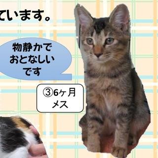 大人しい子猫のキジトラちゃん