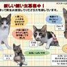 大人しい子猫のキジトラちゃん サムネイル2