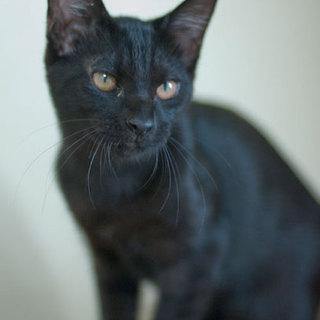 美形スレンダー黒猫