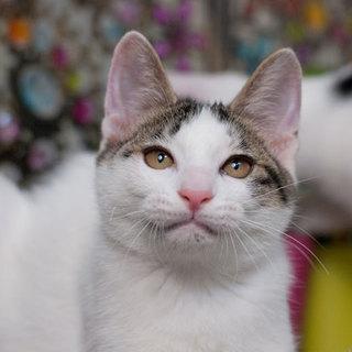 丸顔のほほえみ猫
