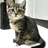 生後1ヶ月のキジ白ちゃん サムネイル2