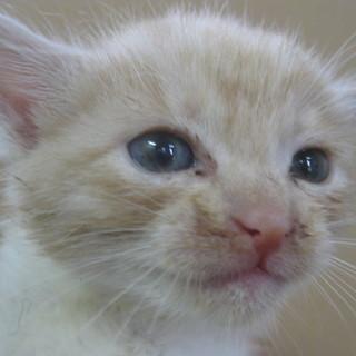 子猫を保護しました!可愛い4兄弟