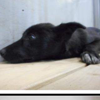 里親さんを待っています。成犬♀黒