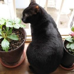 「始まりは、おしゃべり猫のくろちゃん」サムネイル2