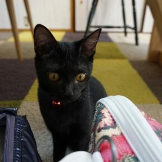 かわいい黒猫ののり子ちゃん