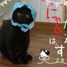 かわいい黒猫ののり子ちゃん サムネイル6