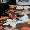 黒猫ペーター サムネイル3