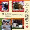 人も猫も好きなマロンちゃん サムネイル6