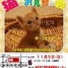人も猫も好きなマロンちゃん サムネイル7