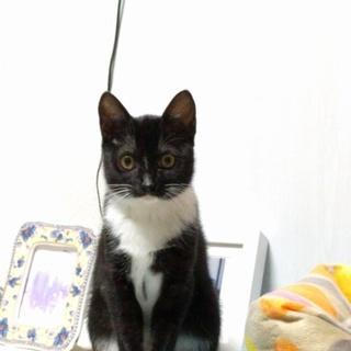 美猫の黒白ちゃん