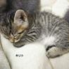 ねこママも人間ママもだぁいすきの愛され猫