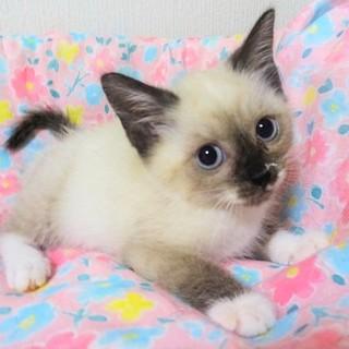白いソックスが可愛い、キティちゃん
