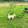 畑の草取りをするお父さんと、虫捕りをするシロ。